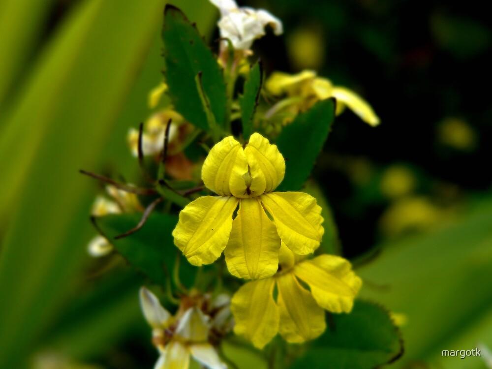 Flower by margotk