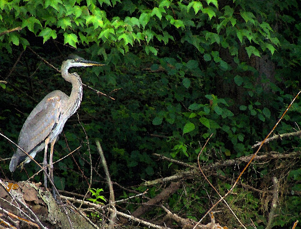 Blue Heron by Clarence R. Walker