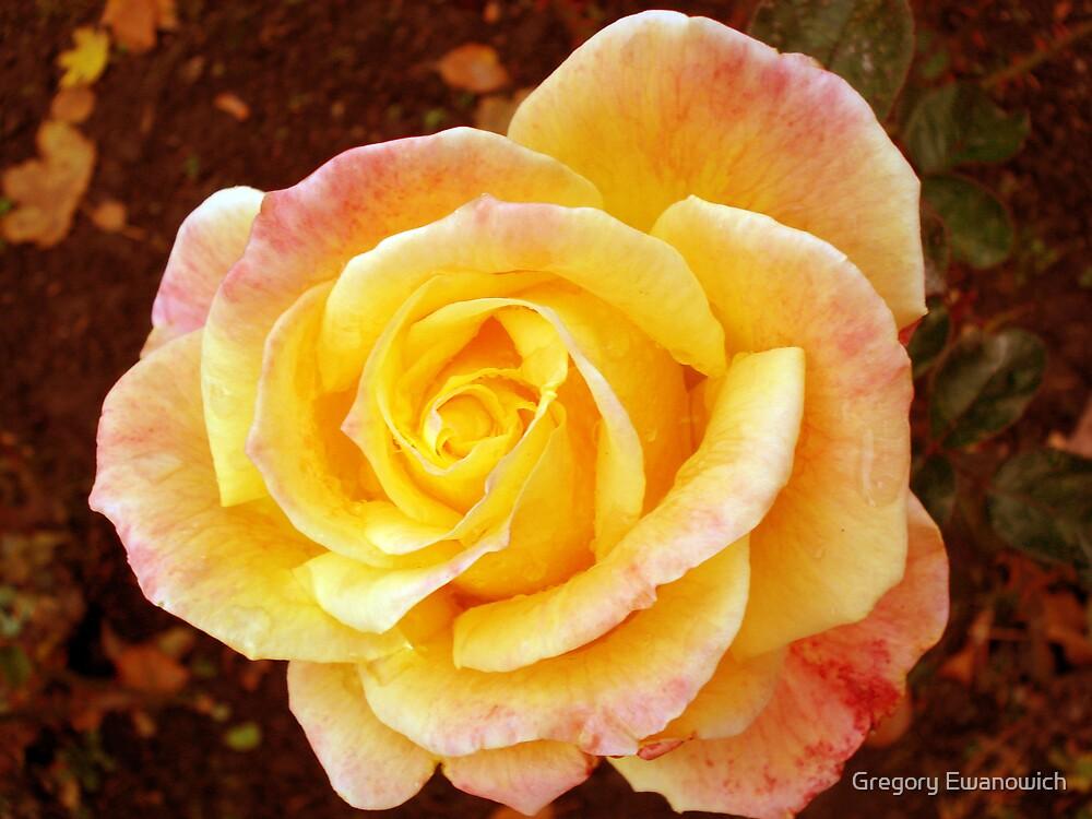 Perfect Peach  by Gregory Ewanowich