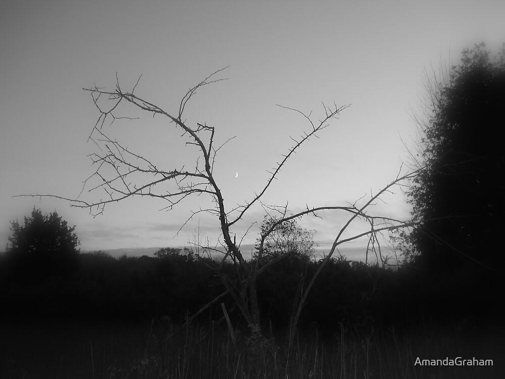 moon through a tree by AmandaGraham