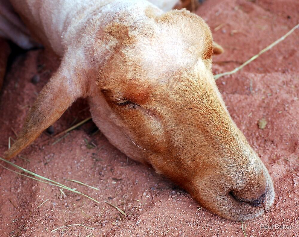 Desert Goat by Paul Baker