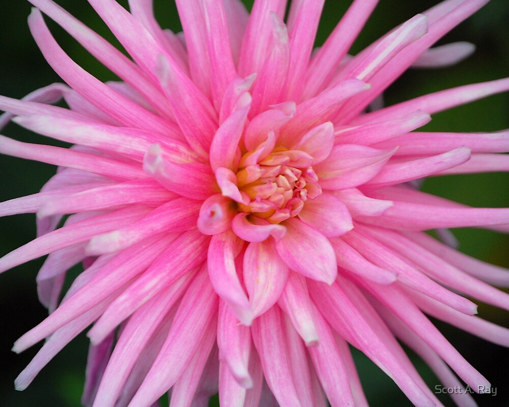 Pretty in Pink by Scott A. Ray