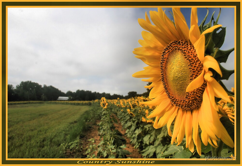 Country Sunshine by photomama4