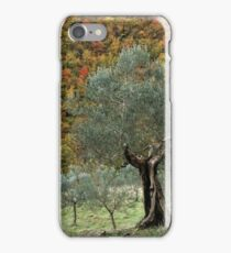 Olive Trees in the Valley iPhone Case/Skin