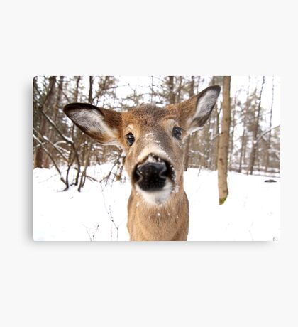 Nosey - White-tailed Deer Metal Print
