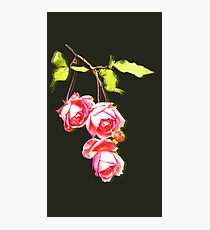 Roses_ Triple Photographic Print