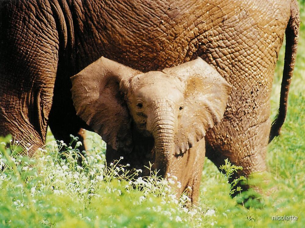 elephant calf by nicolette