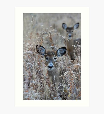 In the Meadow - White-tailed deer Art Print