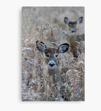 In the Meadow - White-tailed deer Canvas Print
