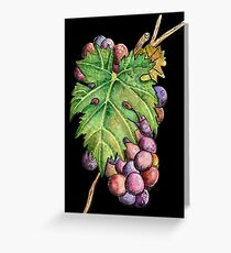 Colorful Wine Grapes Greeting Card