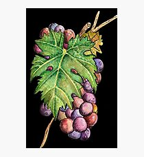 Colorful Wine Grapes Photographic Print