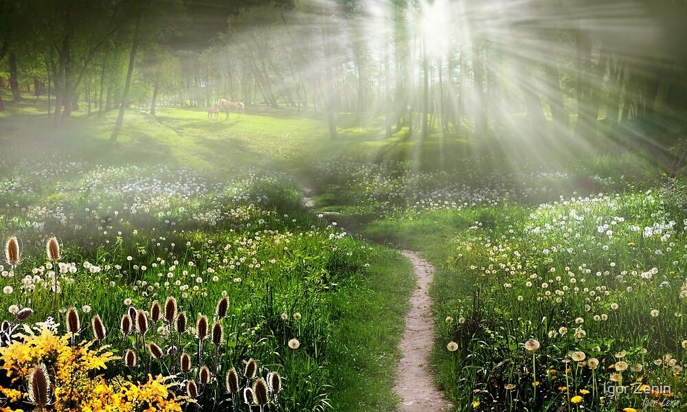 Meadow Trail by Igor Zenin