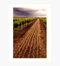 Barossa Vines Art Print