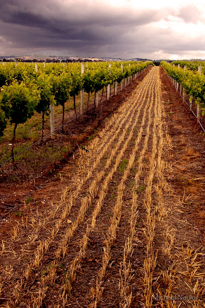 Barossa Vines by Michael Naylor