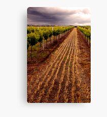 Barossa Vines Canvas Print
