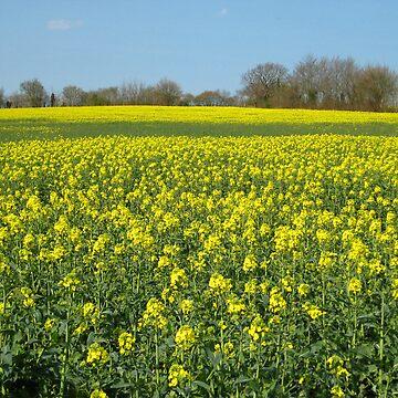 Yellow field by Lpixel