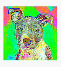 Pit Bull Puppy Pop Art Portrait Photographic Print