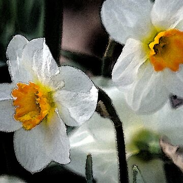 Narcissus papyraceus by RickWalker