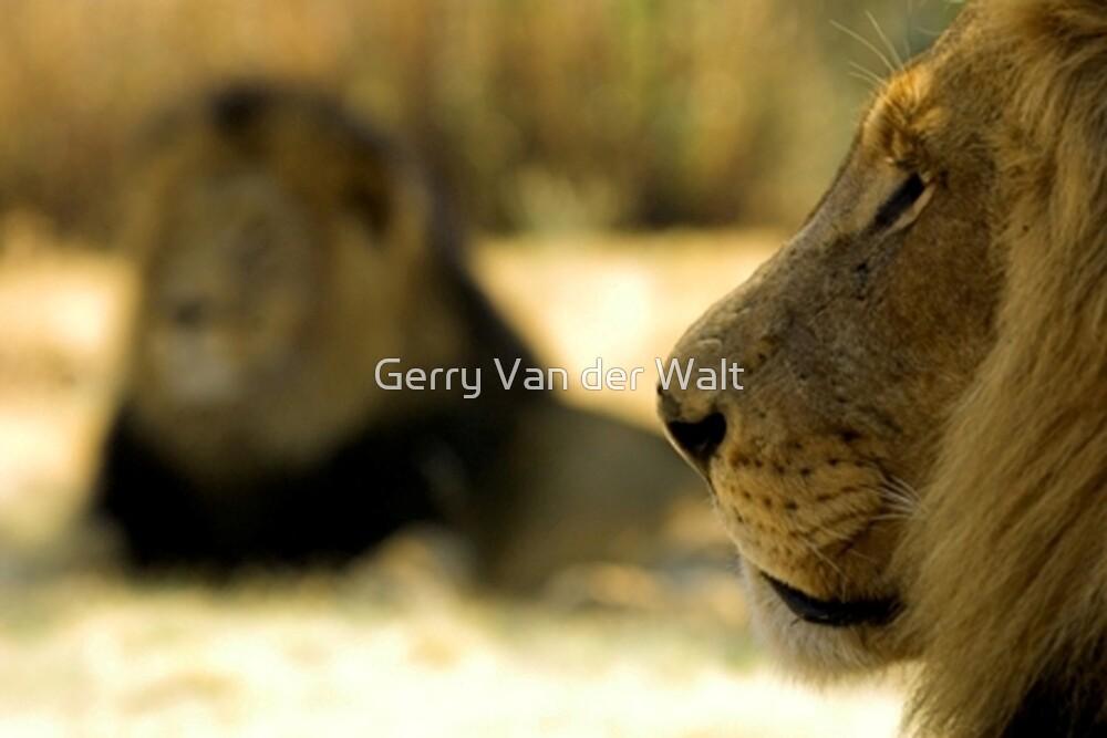 Lion and Silhouette by Gerry Van der Walt