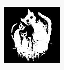 Ghost cats Photographic Print