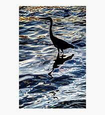 Crane Reflecting in Water Photographic Print