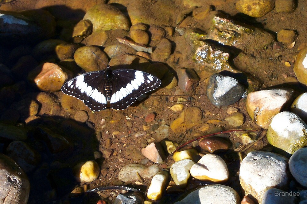 Black and White butterfly by Brandee