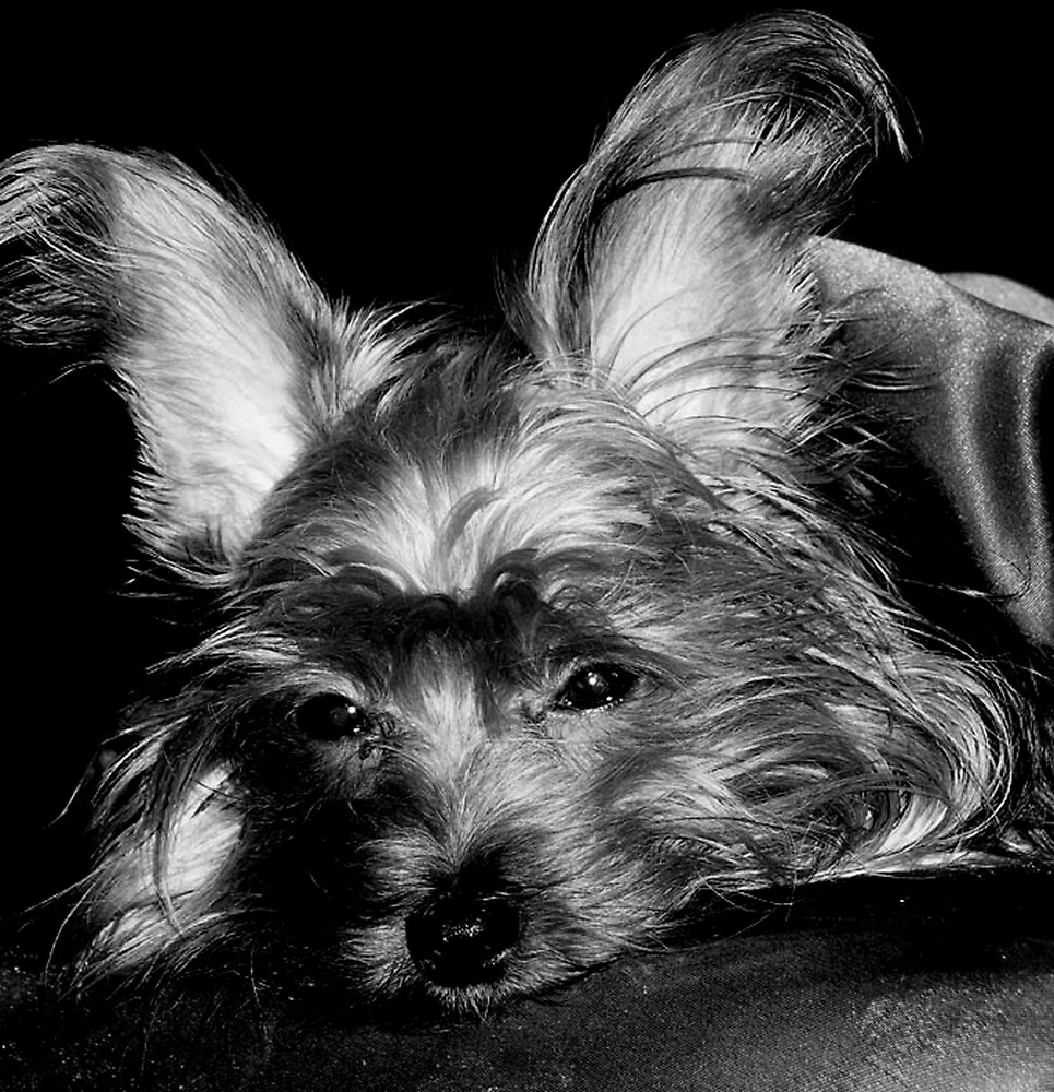 B&W Dog Portrait by Kimberly Sharpe