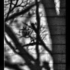 Shadows by Sheryl Gerhard