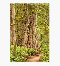 Timeless Trees Photographic Print