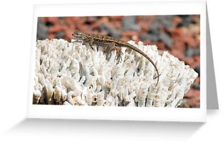Western Fence Lizard by Eyal Nahmias