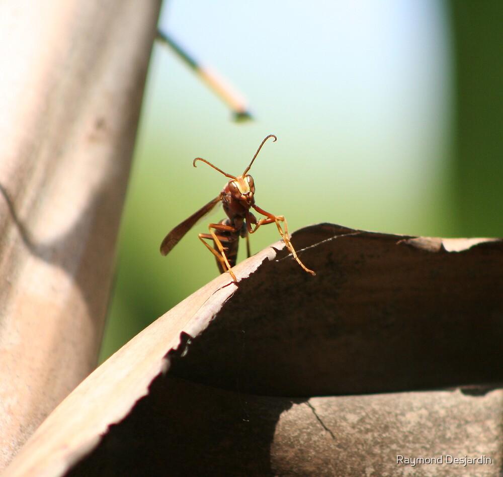 wasp on a palm by Raymond Desjardin