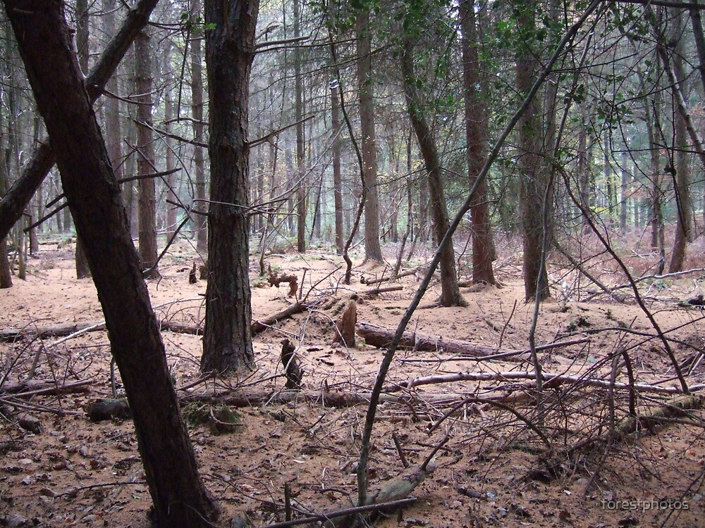 Thee Old Forest by forestphotos
