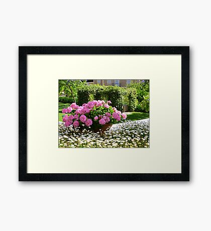 A Pot Of Pink Perfection..........................Mallorca Framed Print