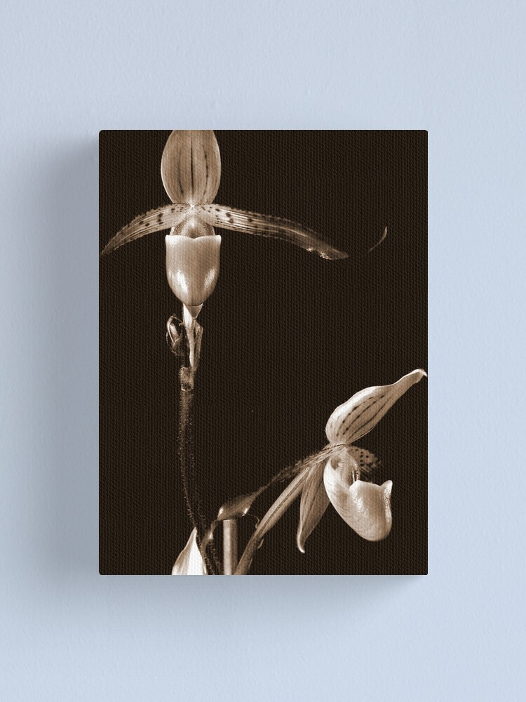 Alternate view of Two Orchids Canvas Print