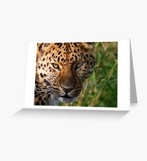 Sly Look Greeting Card
