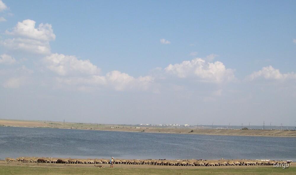 dam with sheep by sergu