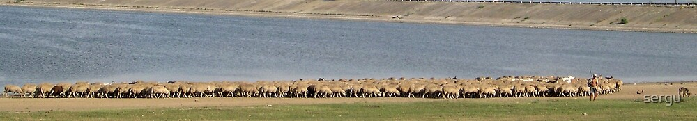 sheeps by sergu