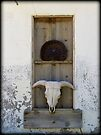 Bison Skull in Window by Kimberly Chadwick