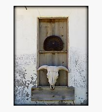 Bison Skull in Window Photographic Print