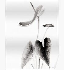 Anthurium Poster