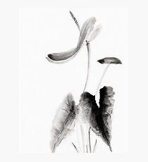 Anthurium Photographic Print
