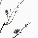 Plum Blossom by dnsei