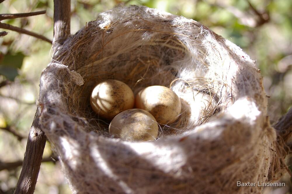 Eggs by Baxter Lindeman
