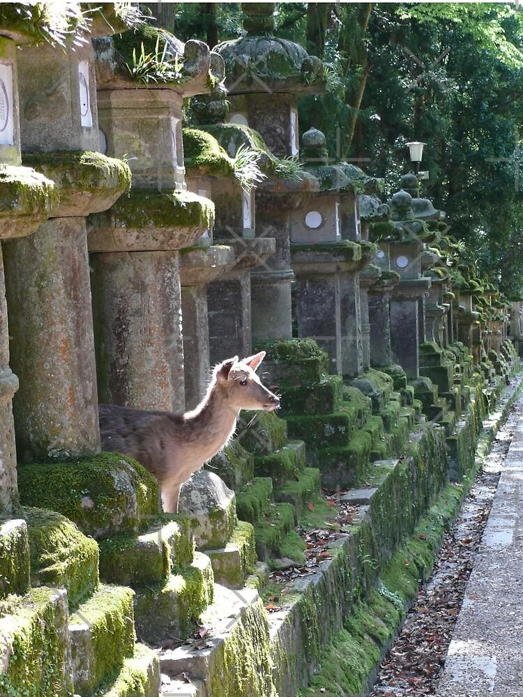 «Biche Temple Nara» par Timena