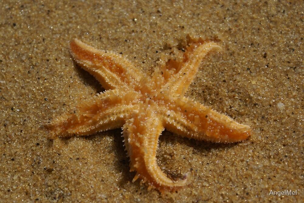 Star Fish by AngelMel