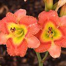 Fleurs orange by © Joe  Beasley IPA