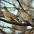Mourning Doves by Karen  Helgesen