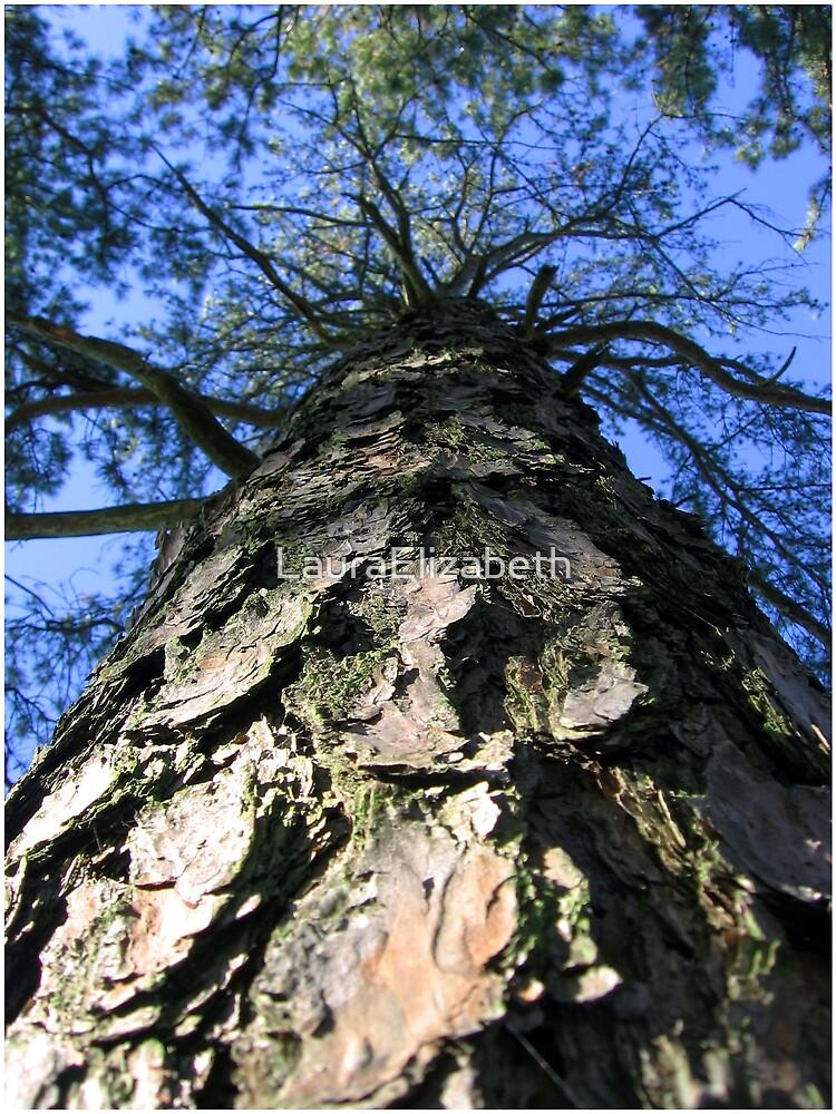 Pine Bark by LauraElizabeth