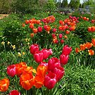 A Splash of Spring by MarianBendeth
