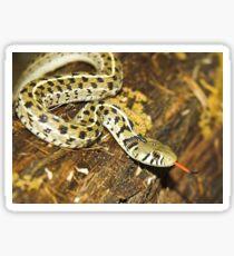 Checkered Garter Snake Sticker